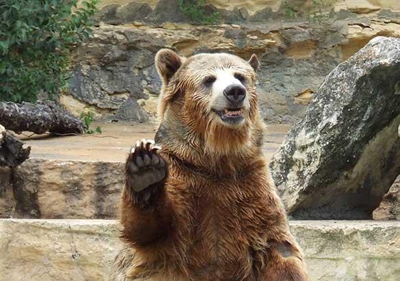 Bears Everywhere