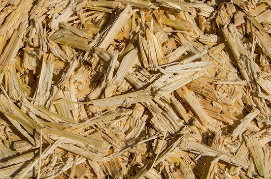 Can sugar cane bagasse solve our clean electrical power generation problems? Source: Adobe Stock/ idmanjoe.
